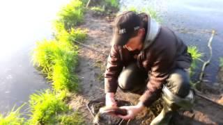 Рыбалка в Кушве - Белоярка ; Карась Фанера