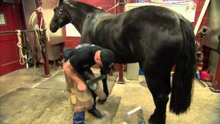 U.S. Army farrier Charles Morrison shoes a horse