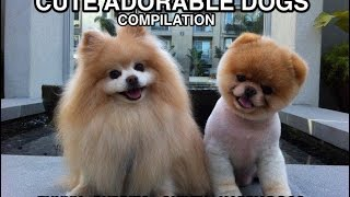 Cute Funny Dog Compilation - Wagging Tail