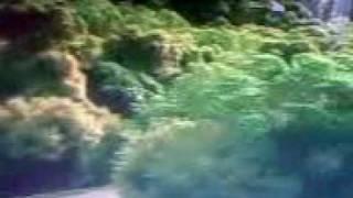 Download Video avatar xxx.3gp MP3 3GP MP4