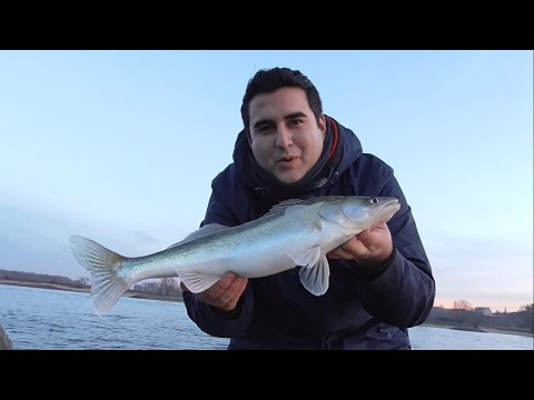 Zander gesucht #mit Big L Fishing in Holland am Rhein from YouTube · High Definition · Duration:  32 minutes 56 seconds  · 12.000+ views · uploaded on 29.12.2015 · uploaded by Moreno9
