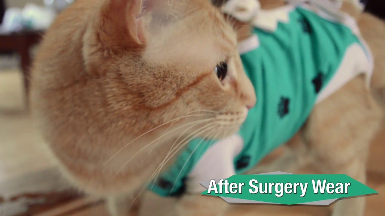After Surgery Wear Vs Traditional E Collar Youtube