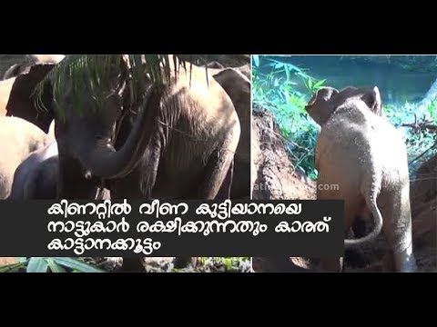 Baby Elephant Rescued From Well In Kothamangalam | Mathrubhumi