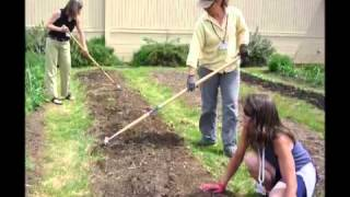 Organic gardening for beginners  l  organic vegetable gardening for beginners