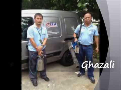 Pest Control Services by Mozzie Services