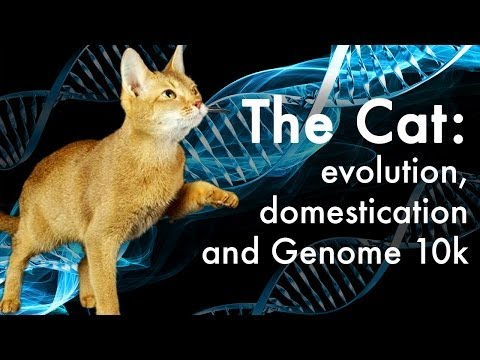 How did cats evolve?