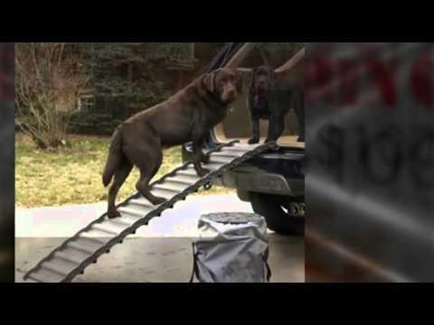 top-5-dog-pet-ramps
