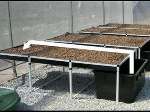 basic aquaponics system youtube