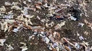 Очевидцы сообщают о множестве выброшенных на юго-западный берег Камчатки мертвых животных