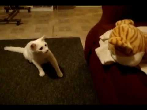 Cats Getting Scared and Jumping Compilation 2013 Part 2 ...