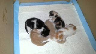 Котятам 9 дней от роду.