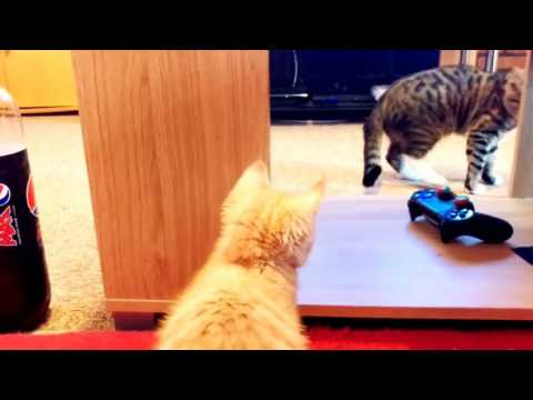 Introducing our kittens to each other - the stand off