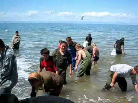 Lake Baikal strange fishery