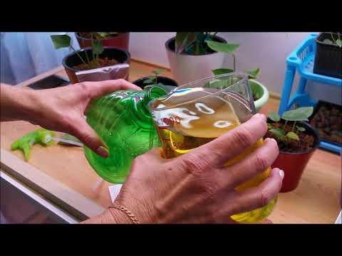 Как подкормить антуриумы, микроудобрениями по листу, приготовление питательного раствора.