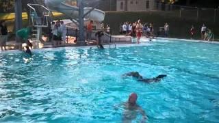 Weimaraner Dusty Jumps Off Diving Board