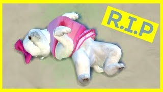 RIP Cuteness Overload! - Let's Play The Sims 4 Cats and Dogs - Part 2
