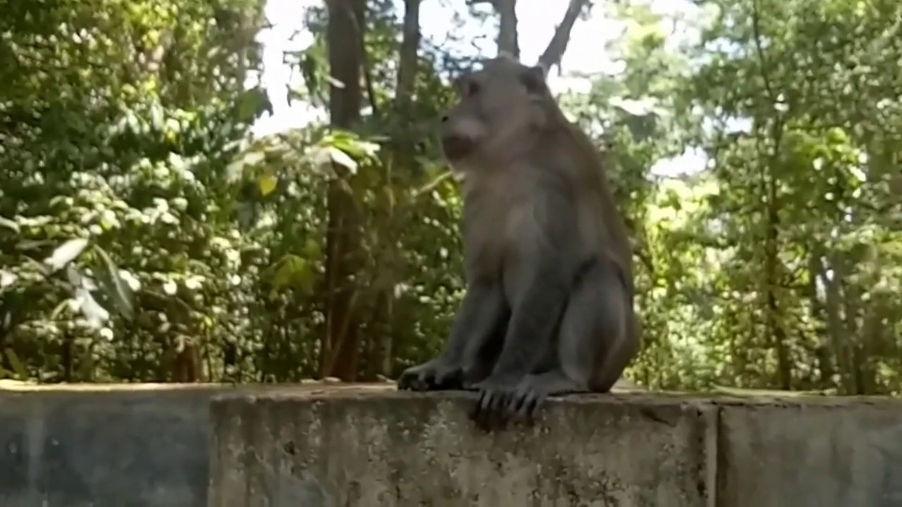 Monkey Forest Taman Wisata Lemor Lombok Timur