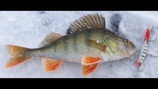 Рыбалка Астана Приехали ловить щуку а наловили окуней
