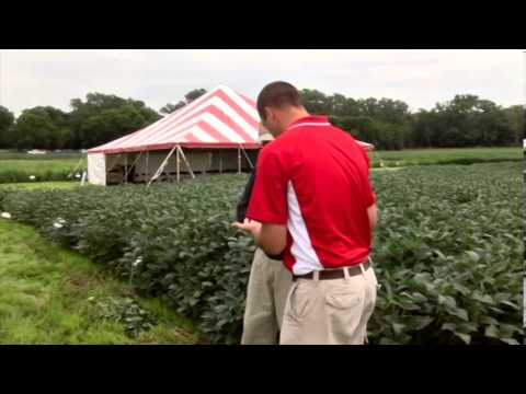 Soybean Nutrients and High-Nitrogen Study