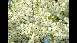 「夜桜お七」「ずっとあなたが好きでした」「愛は祈りのようだね」 この...