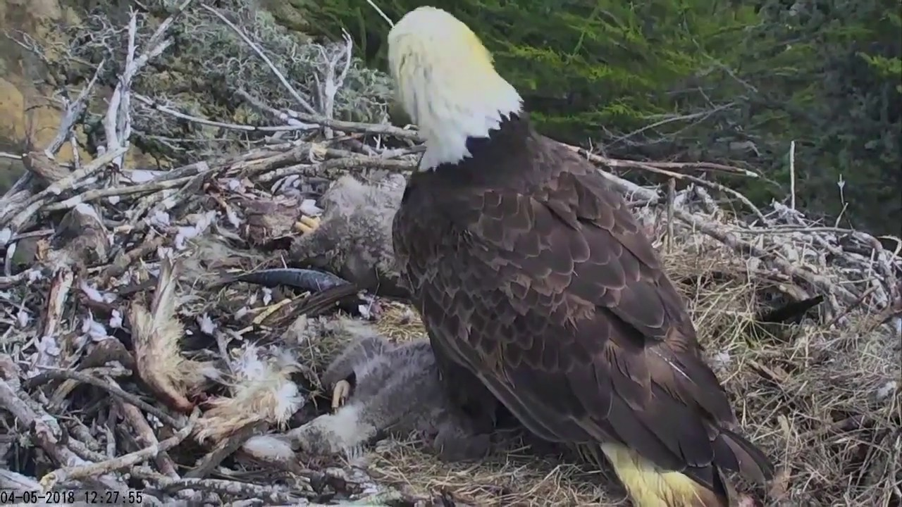 This Bald Eagle Family's Reaction to the California