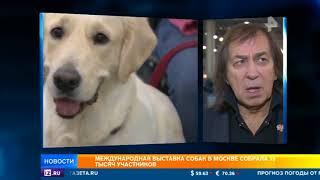 Выставка красоты среди собак собрала в Москве 15 000 участников со всего мира