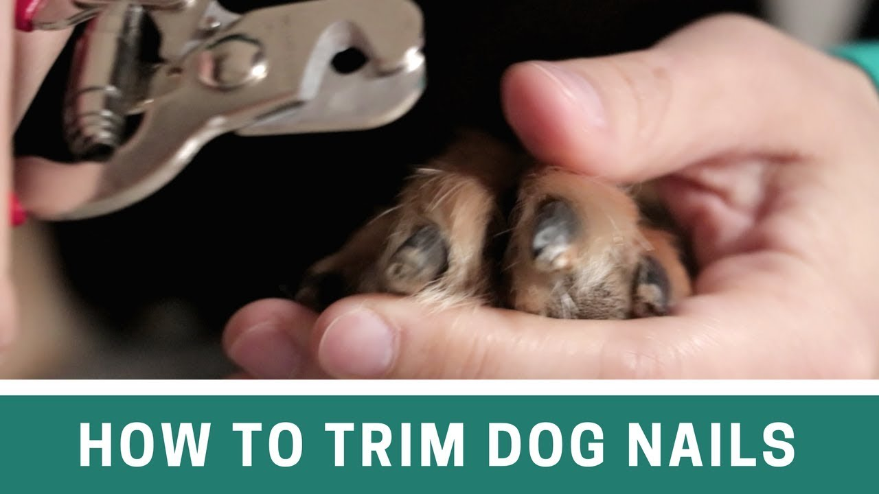 How To Trim Dog Nails With Clippers And File The Alternative Cut Line