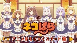 Watch Nekopara Anime Trailer/PV Online