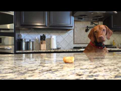 The Struggle Is Real: Dog Vs Tater Tot Edition