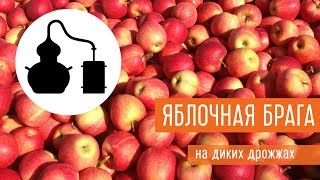 Ставим яблочную брагу