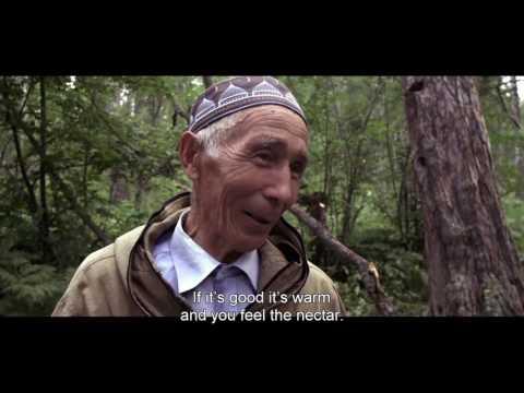 Охотники за медом (трейлер)