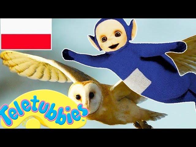 ☆ Teletubisie Po Polsku - 113 DOBRA JAKOŚĆ (Pełny odcinek) ☆ NOWE WIDEO DLA DZIECI ☆