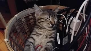 Котенок сладко спит сидя в корзине с зарядками от мобильных телефонов