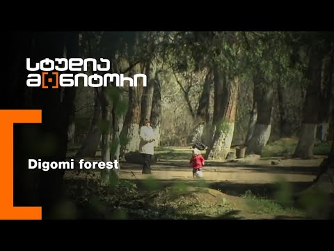 Digomi forest