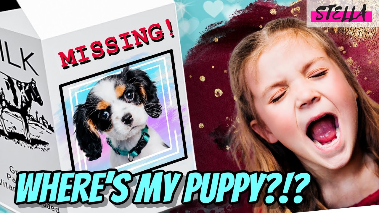 Download Why did our Puppy Run Away!?!