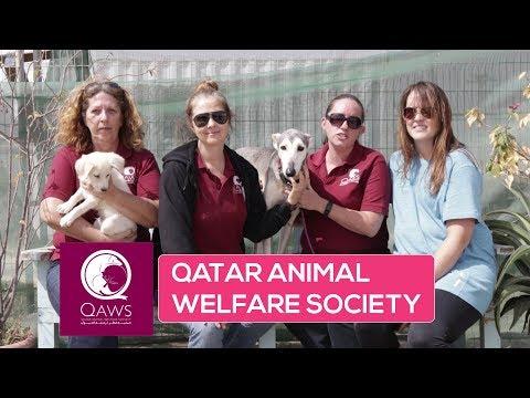 ILQ visits Qatar Animal Welfare Society (QAWS)