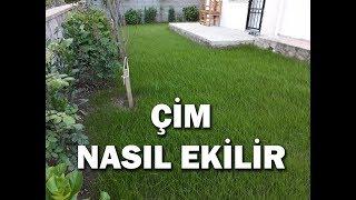 En kolay çim ekimi nasıl yapılır, çim nasıl ekilir ?
