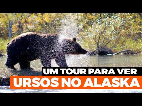Um Tour para ver os Ursos no Alaska