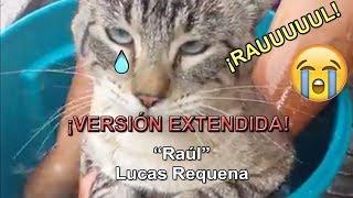 """""""¡raúl!""""  Versión Extendida    Lucas Requena - ¡gatos Cantando A Raúl!"""