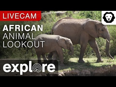 Live Stream Animal : African Animal Lookout Camera