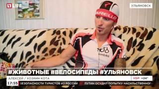Кот стал членом клуба велосипедистов в Ульяноской области(Каждый день кот проезжает 25 километров на плече хозяина Подробнее на сайте