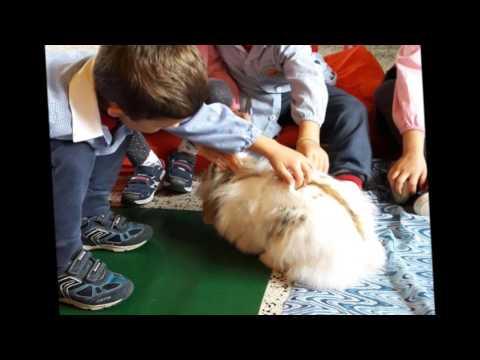 Fienile Animato Onlus: la Pet-Education nelle scuole