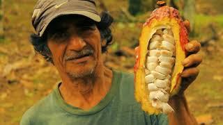 Proyecto Patrimonio del Perú - (English Version) thumbnail