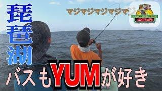 ABSバス釣り動画 琵琶湖バスもYUM(ヤム)のワームが好き 夏休みもYUMで決まり!