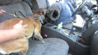 This Video Previously Contained A Copyrighted Audio Track. Due To A Claim By A Copyright Holder, The Audio Track Has Been Muted.     My Dog Jumping Threw A Car Window