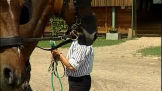 a ló papillomatosisának kezelése fertőtlenítés napokkal az oltás előtt