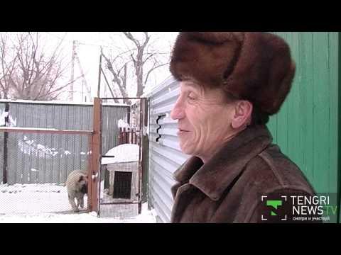 Танцующий пес из Караганды не поедет на ток-шоу в Москву