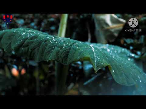 Relaxing Music & Rain Sounds - Beautiful Guitar Music, Sleep music | Spa music | King Of Innovative