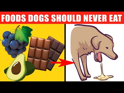 dangerous-foods-your-dog-should-never-eat