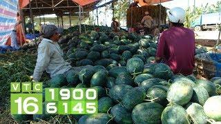 Trung Quốc làm khó nông sản Việt | VTC16